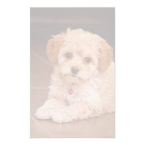 Baby Maltese poodle mix or maltipoo puppy dog Stationery