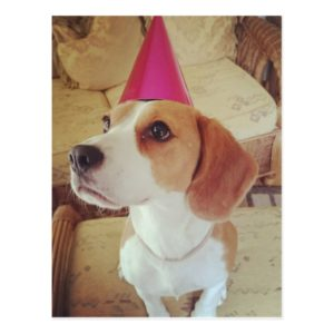 Birthday Beagle postcard