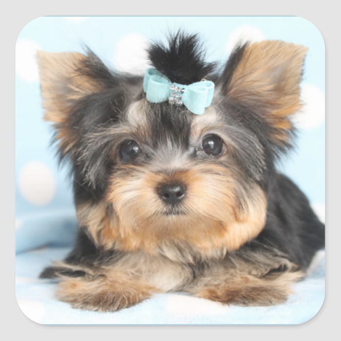 Cute Little Tiny Yorkie Pup Design