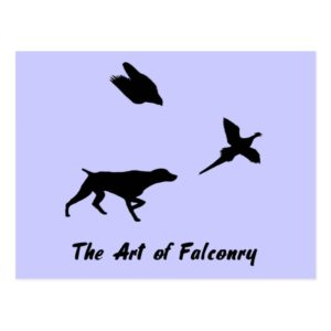 German Shorthair Pointer and Falconry Postcard