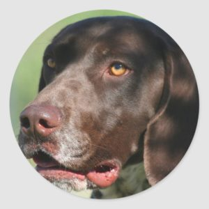 German Shorthaired Pointer Classic Round Sticker
