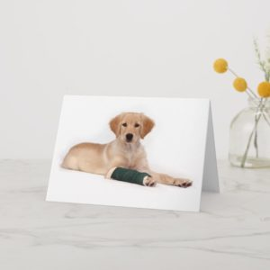 Golden Puppy Get Well Card
