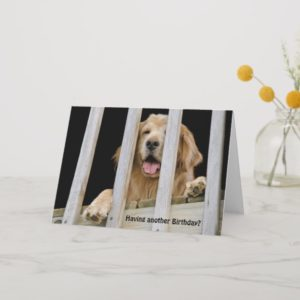Golden Retriever Humorous Birthday Card