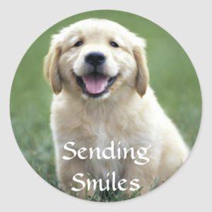 Hello Golden Retriever Puppy Dog Thinking Of You Classic Round Sticker
