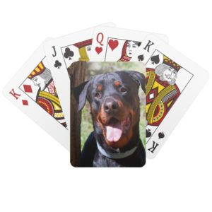 USA, California. Rottweiler By A Tree Playing Cards