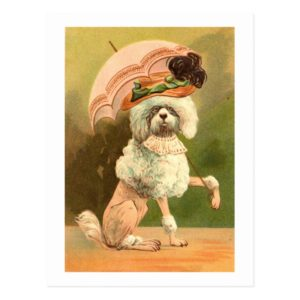 Vintage pink poodle with umbrella postcard