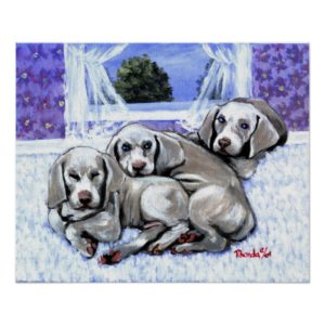 Weimaraner Puppies Dog Portrait Poster