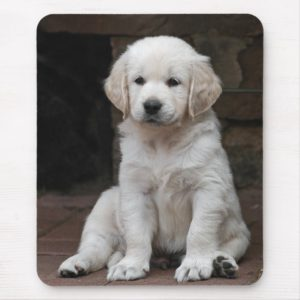 White golden retriever puppy Puppy Mouse Pad