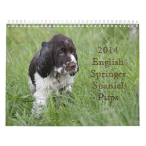 2014 English Springer Spaniel Pups Calendar