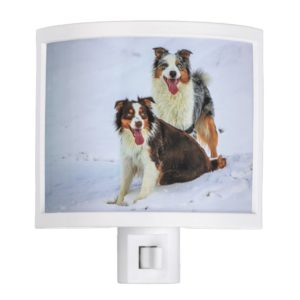 Australian shepherd couple dogs night light