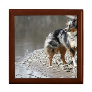 australian shepherd full blue merle gift box