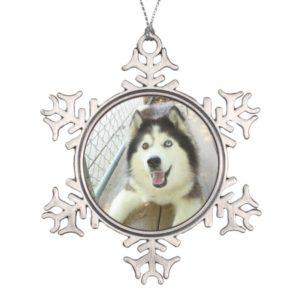 Beautiful Siberian Husky Ornament