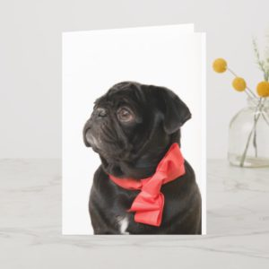 Black pug  with red bow holiday card