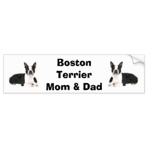 Boston Terrier Mom & Dad Bumper Sticker