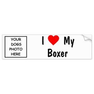Boxer Bumper Sticker