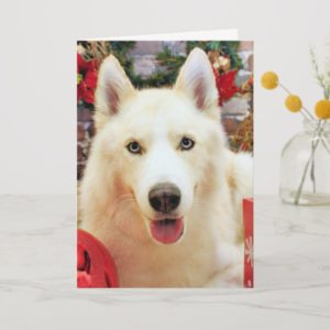 Christmas - Siberian Husky - Teagarden Portraits Holiday Card