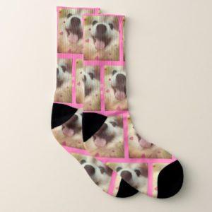 Cute Pomeranian Puppy Dog Socks