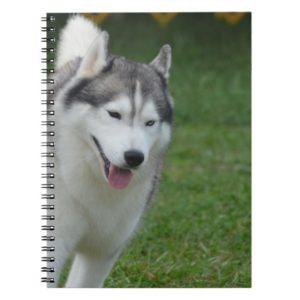 Cute Siberian Husky Notebook