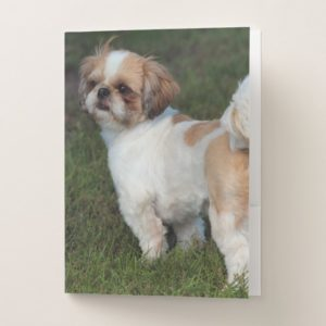 Cutest  Shih Tzu Pocket Folder