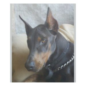 Doberman Pinscher Fleece Blanket