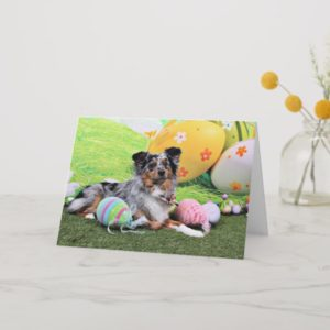 Easter - Australian Shepherd - Silas Barker Holiday Card