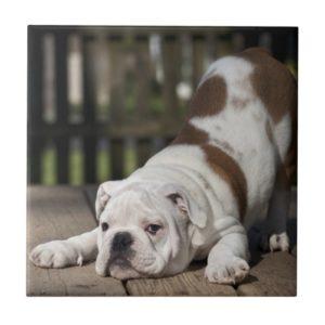 English Bulldog Puppy Tile