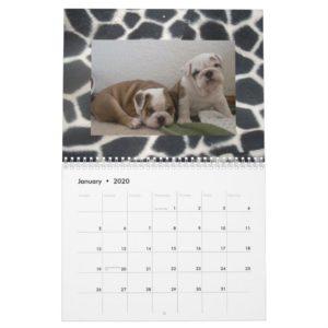 English Bulldogs & Puppies Calendar! Calendar