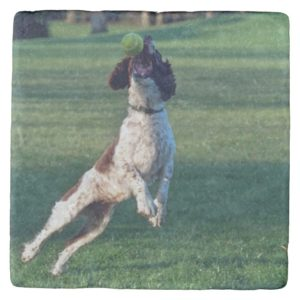 english springer catching ball.png stone coaster