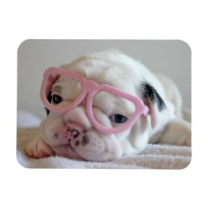 French Bulldog in Heart Glasses Magnet
