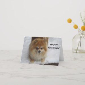 HAPPY BIRTHDAY SAYS THE POMERANIAN CARD