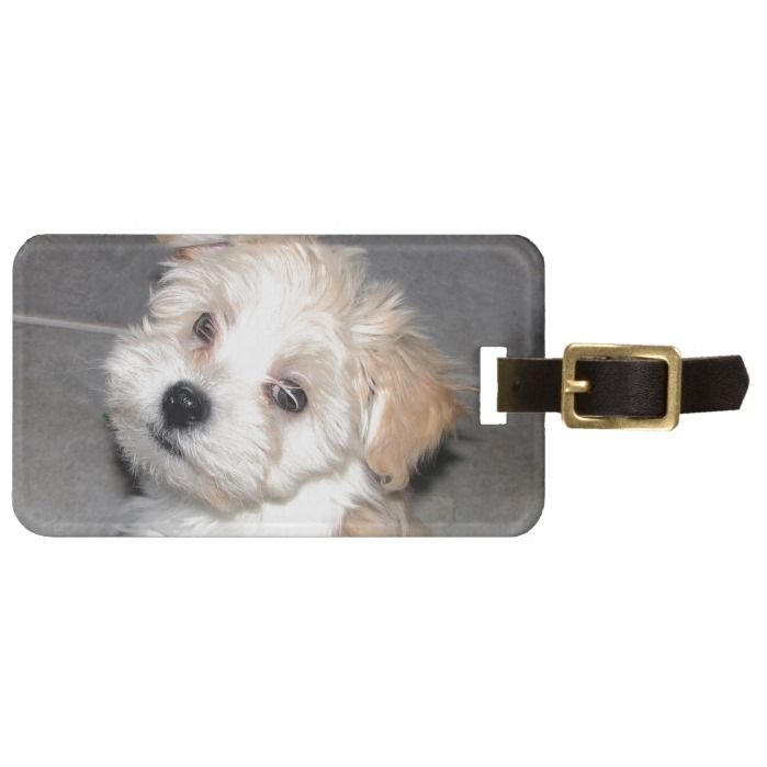 Havanese Rescue Puppy Tan Beige Luggage Tag