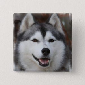 Husky Dog Square Button