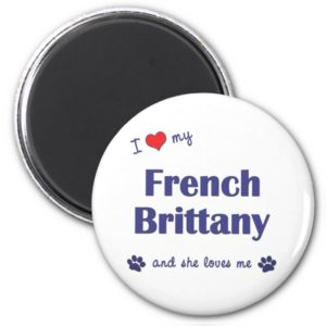 I Love My French Brittany (Female Dog) Magnet