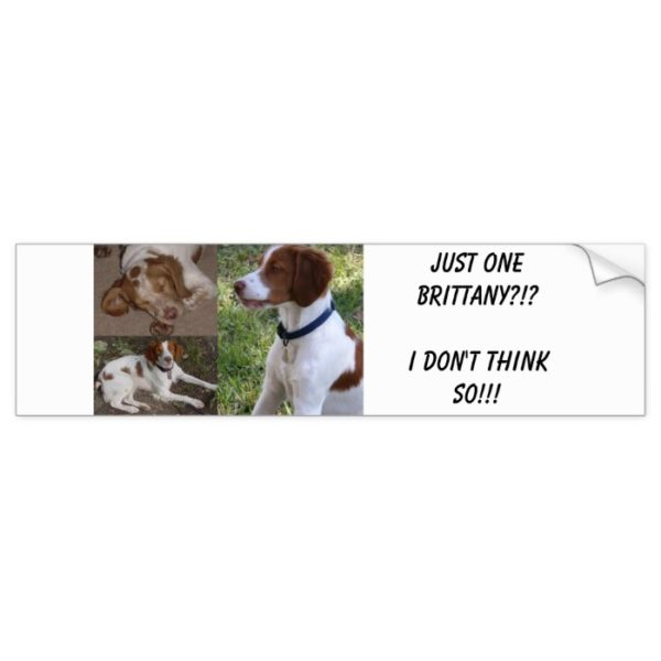 Just ONE Brittany?!?I don't think so!!! Bumper Sticker