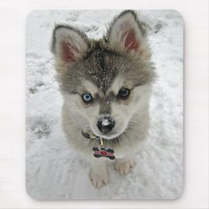 Love Siberian Husky Puppy Dog In Snow Mousepad