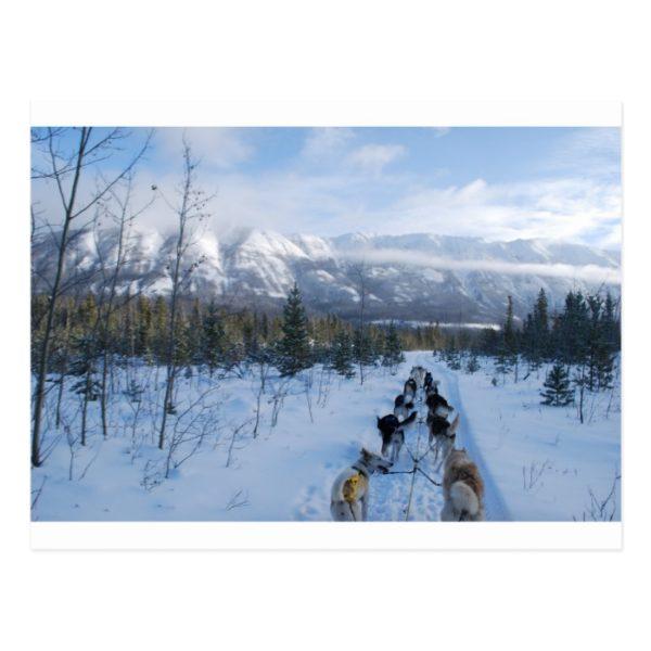 ParrotSleds - Landscape Postcard