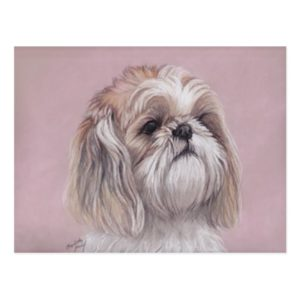 Shih tzu Dog Art Postcard