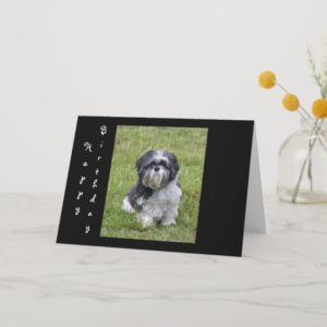 Shih Tzu dog cute happy birthday greeting card