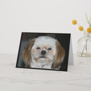 Shih Tzu Never Seem To Age! Birthday Card