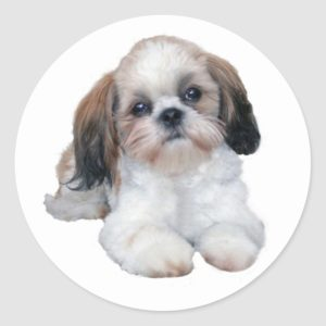 Shih Tzu Sticker