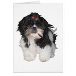 Shitzu Shih Tzu Puppy Dogs