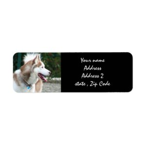 Siberian Husky Address labels