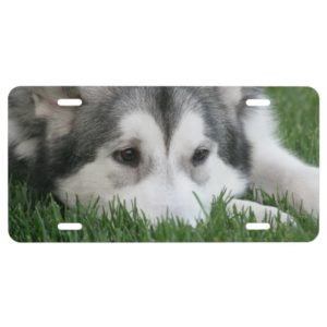 Siberian Husky Dog License Plate