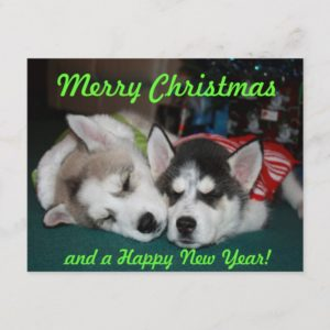Siberian Husky Puppy Post Card