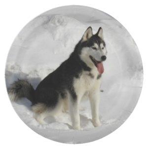 siberian-husky sitting paper plate