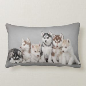 Six huskies lumbar pillow