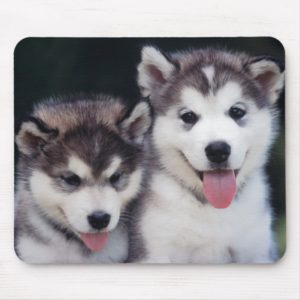 Smiling Siberian Husky Puppies Mousepad