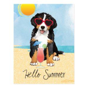 Summer Bernese Mountain Dog Postcard