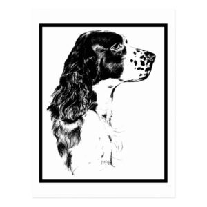 Vintage Art English Springer Spaniel Postcard