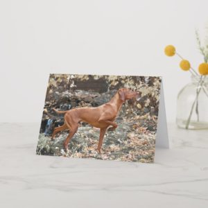 Vizsla Greeting Cards